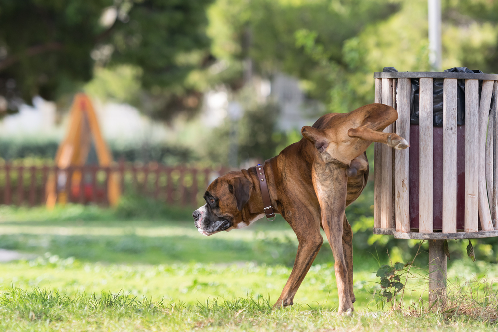 how long can dogs go without peeing