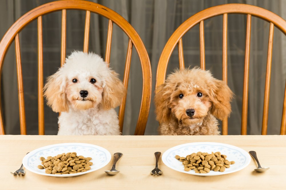 best hypoallergenic dog food for dogs with allergies