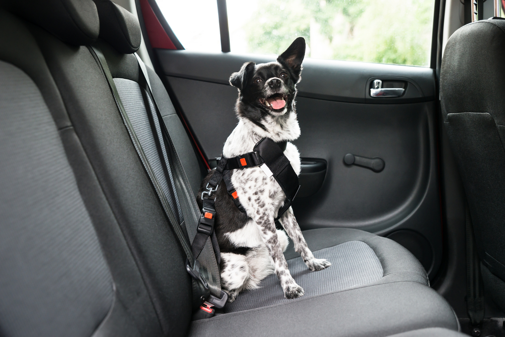 best seat belt for dogs