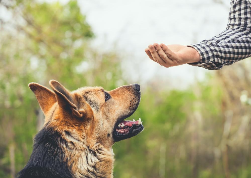 german shepherd temperament