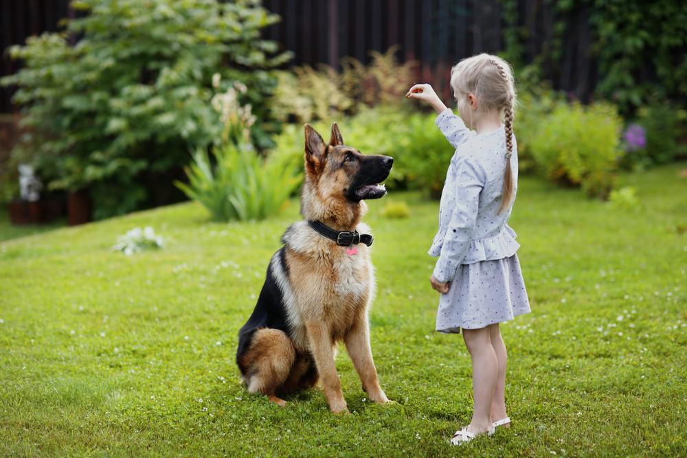 training a german shepherd