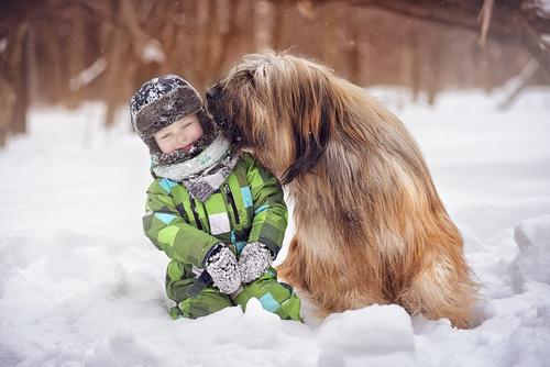 Briard large dog