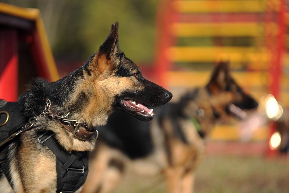 best harness for german shepherd