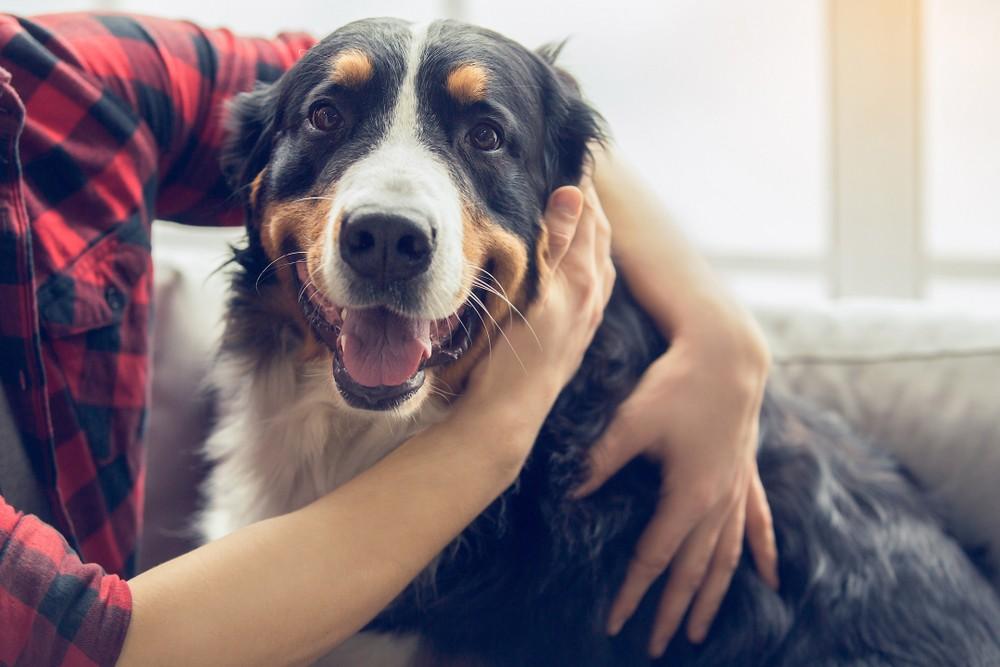 large dog breeds list