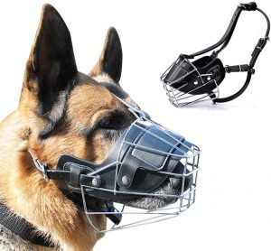 How to Pick the Perfect Dog Muzzle