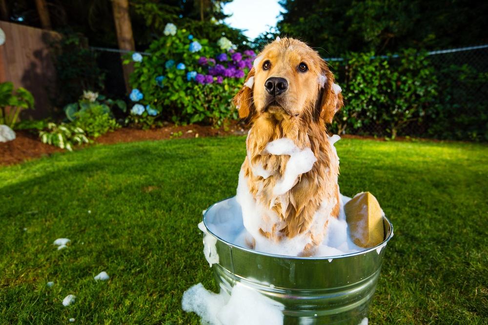 Best Dog Shampoo for Dry Skin and Dandruff