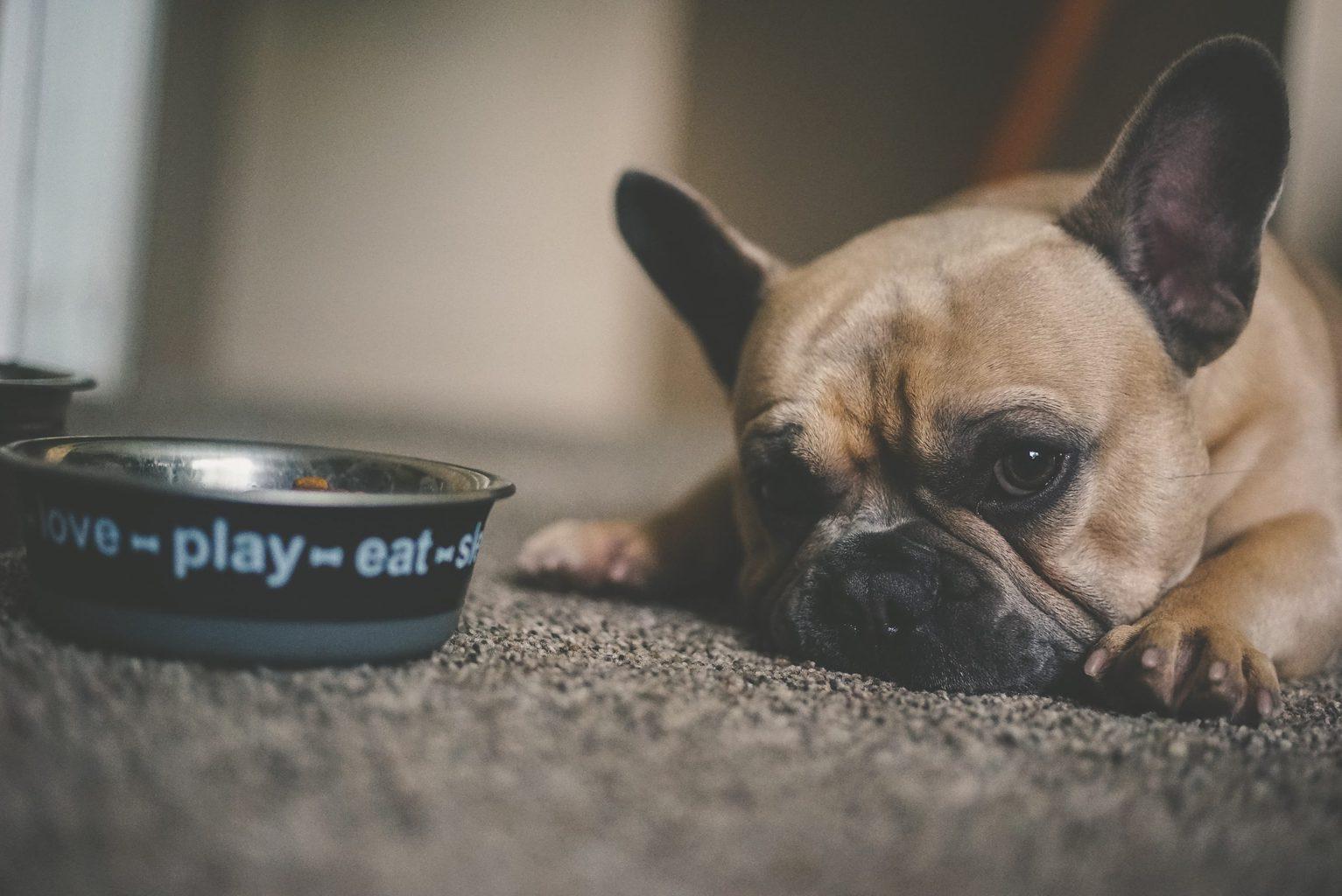 Best Affordable Dog Food Brands
