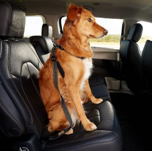 Best Car Seats for Large Dogs