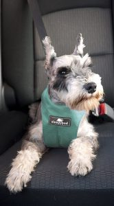 Best Dog Car Harnesses