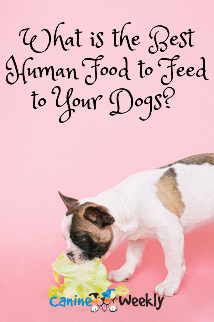 Best Human Food to Feed to Your Dogs