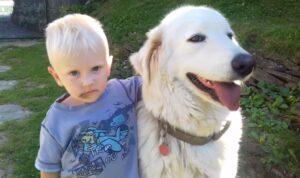 Slovensky Cuvac dog with a boy