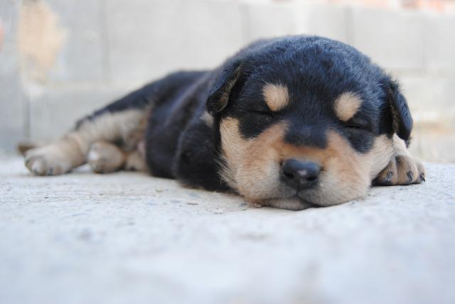 Puppy Sleep Guide