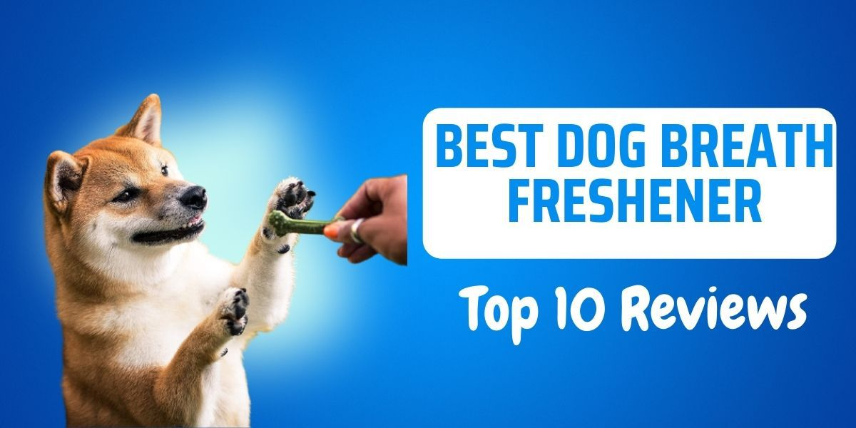 best dog breath freshener